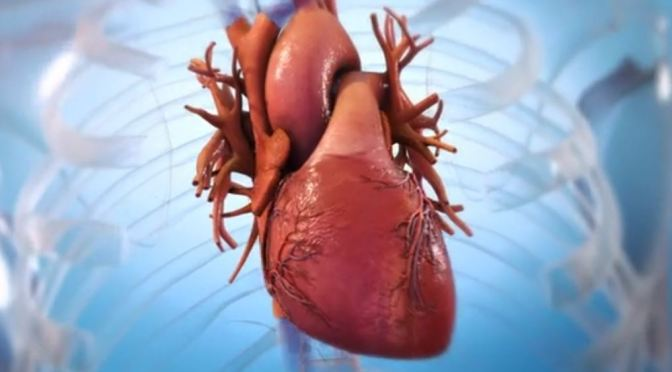 "Medical Innovations: BioLife4D Creates First 3D ""Bioprinted"" Human Heart From Cardiac Tissue"