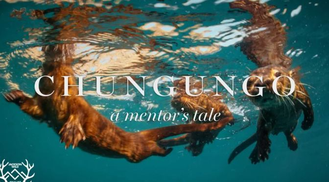 "Top New Wildlife Films: ""Chungungo – A Mentor's Tale"" Directed By Ben Goertzen (2019)"