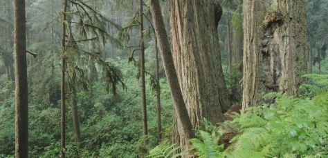Redwoods Nature Film by Rudy Wilms (2019)