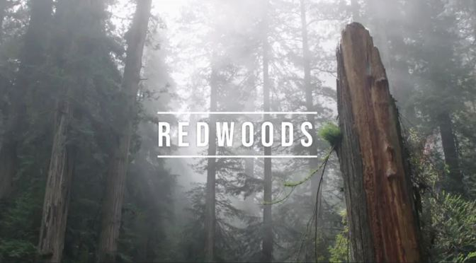 "Top New Travel Videos: ""Redwoods"" Directed By Rudy Wilms (2019)"