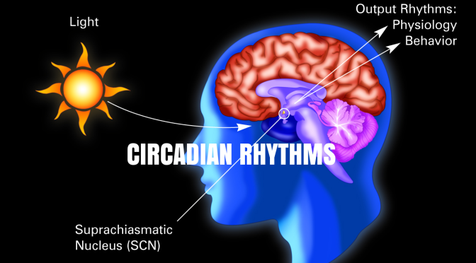 "Studies: Irregular Sleep Disrupts Pancreatic ""Circadian Rhythms"", Leading To Type 2 Diabetes"