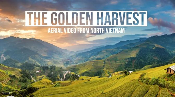 "Top New Travel Videos: ""The Golden Harvest"" In North Vietnam (2019)"