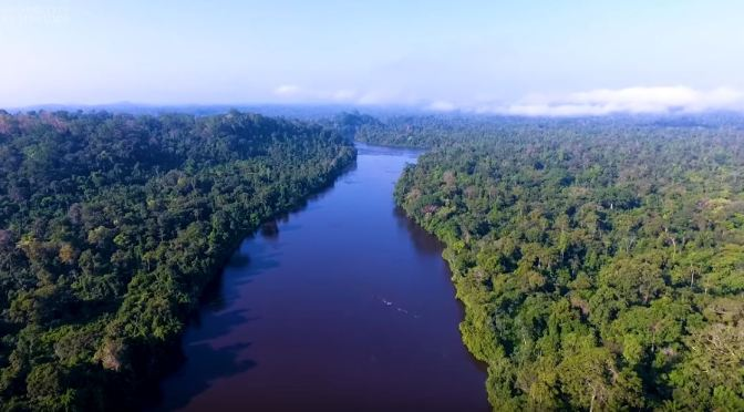 "New Research Videos: ""In Search Of The Amazon's Tallest Tree"" (Cambridge)"