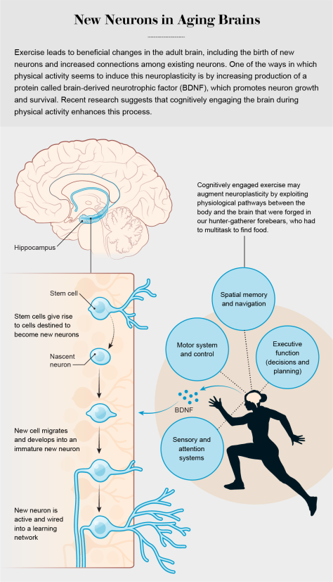New Neurons in Aging Brains Why Your Brain Needs Exercise Scientific American December 18 2019