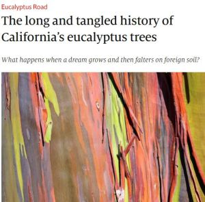 The Long and Tangled History of California's Eucalyptus Trees The Economist December 2019