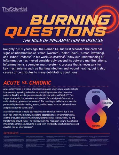 The Role of Inflammation In Disease Acute v Chronic TheScientist 1