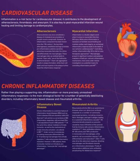The Role of Inflammation In Disease Chronic Inflammatory Diseases TheScientist 2