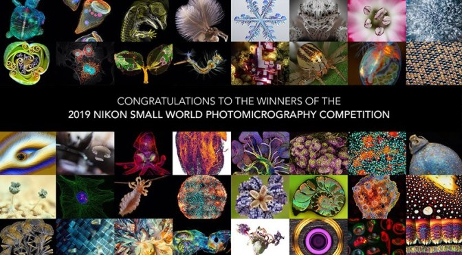 "Photography: ""2019 Nikon Small World Competition – Photomicrography"""