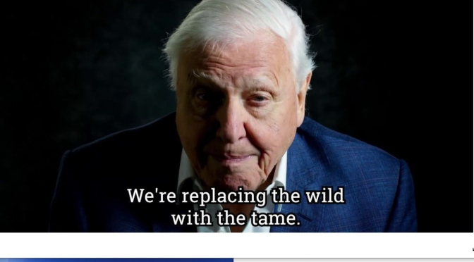 """David Attenborough – A Life On Our Planet"" Recounts 93-Year Old's Life In Nature (Trailer)"