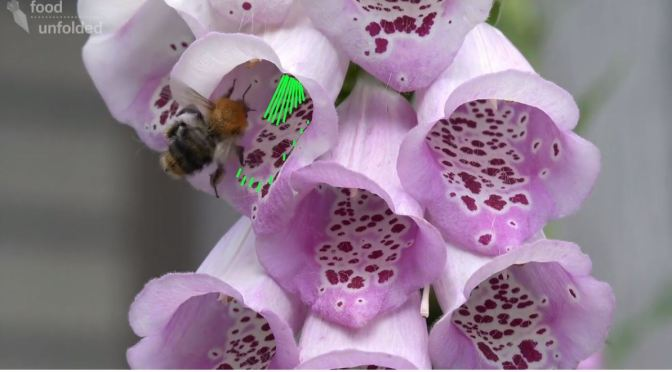 Nature & Science: Making Flowers Of  Food Plants More Attractive To Insect Pollinators (Cambridge)