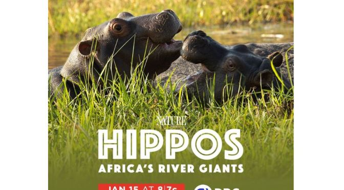 "Travel & Nature: ""Hippos – Africa's River Giants"" (PBS Inside Nature Video)"