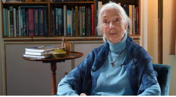 Profiles: 85-Year Old Primatologist Jane Goodall On A Better Future (Cambridge)