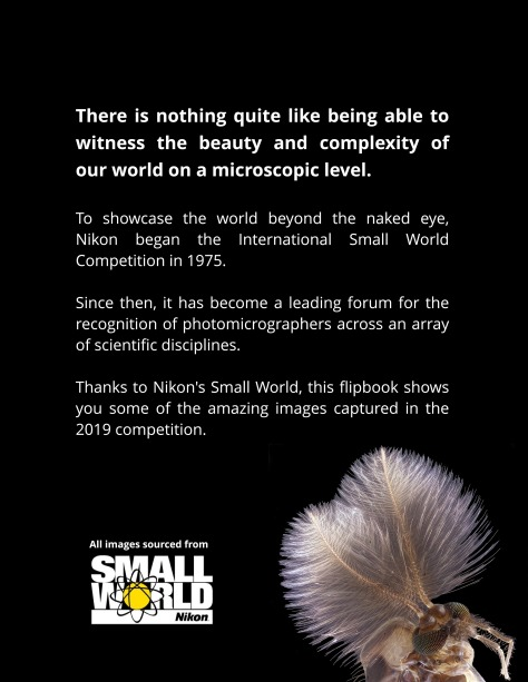 Nikon Small World Competition 2019 page-1