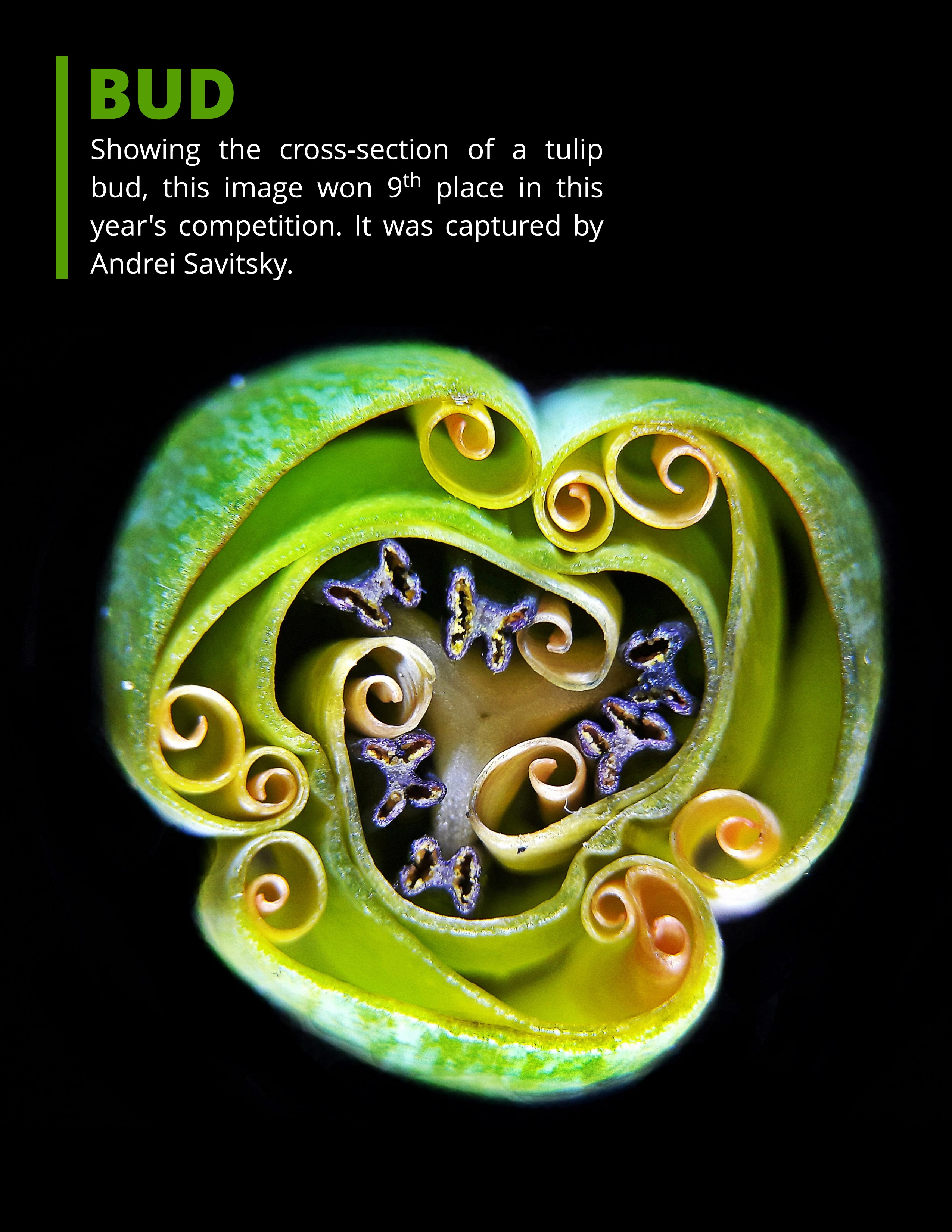 Nikon Small World Competition 2019 page-3