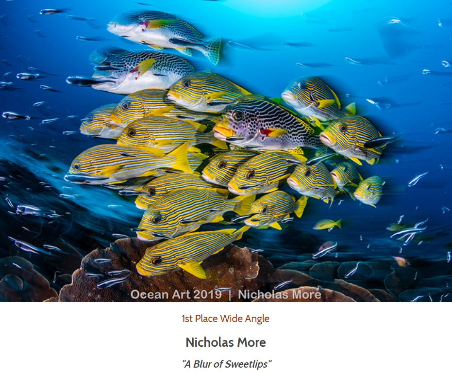 Ocean Art 2019 1st Place Wide Angle Nicolas More A Blur of Sweetlips