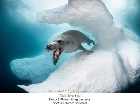 Ocean Art 2019 Best Of Show Winner Crab-Eater Seal by Greg Lecoeur Antartica Peninsula