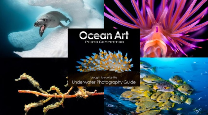 "Photography: ""2019 Ocean Art Photo Competition"" Winners Announced"