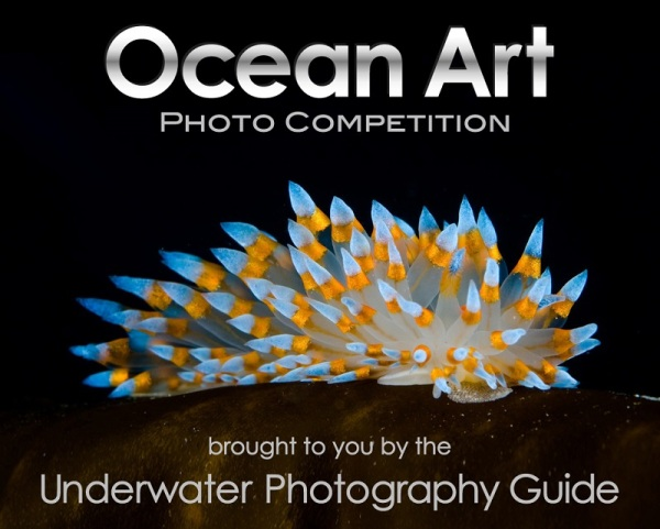 Ocean Art Photo Competition 2019