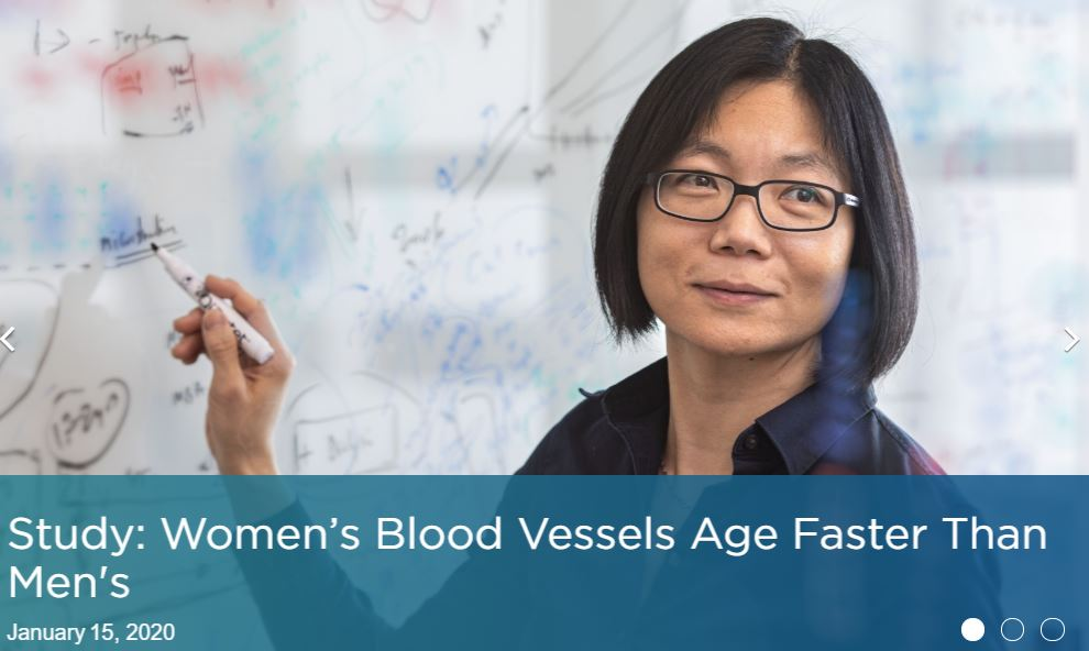 Women's Blood Vessels Age Faster Than Men;s Cedars-Sinai January 15 2020