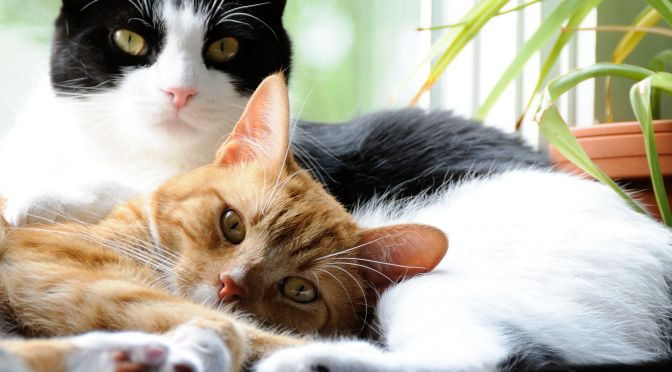 "Best Pets: ""Domestic Cats – Our Wild Companions"""