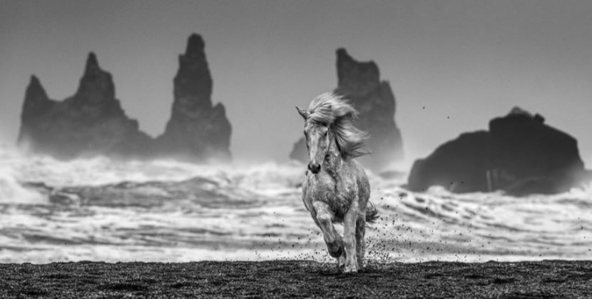 Maddox Gallery 'WHITE HORSES' Living On Earth Exhibition David Yarrow Feb 13 - March 10 2020
