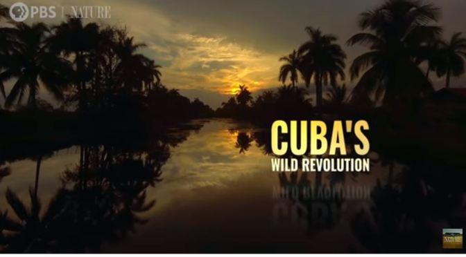 "Wildlife Videos: ""Cuba's Wild Revolution"" (PBS)"