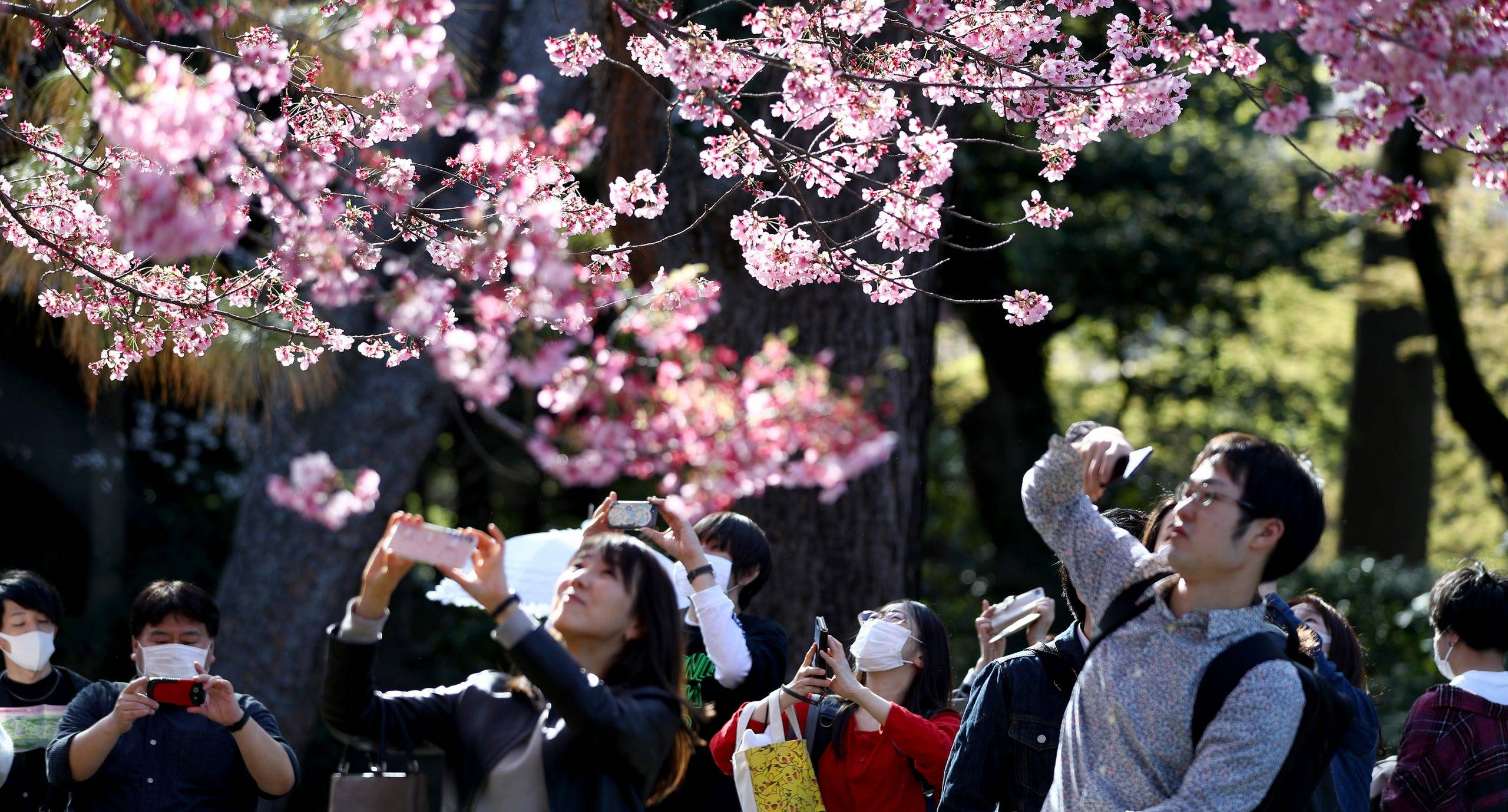 USA Today Cherry Blossoms in Japan March 2020
