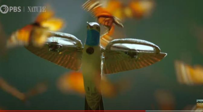 """Top Wildlife Videos: """"A Monarch Butterfly Swarm"""" In Mexico (PBS)"""