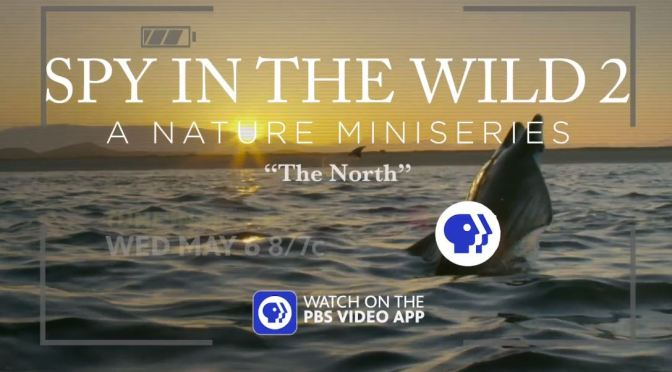 "Wildlife Entertainment: ""Spy In The Wild 2"" Series – ""Hilarious"" (PBS Nature)"