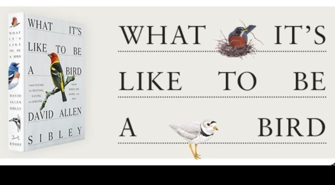"New Art & Nature Books: ""What It's Like To Be A Bird"" – David Allen Sibley (2020)"