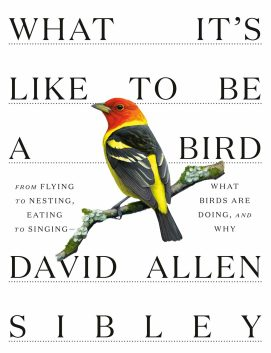 What It's Like To Be A Bird David Allen Sibley Cover April 15 2020