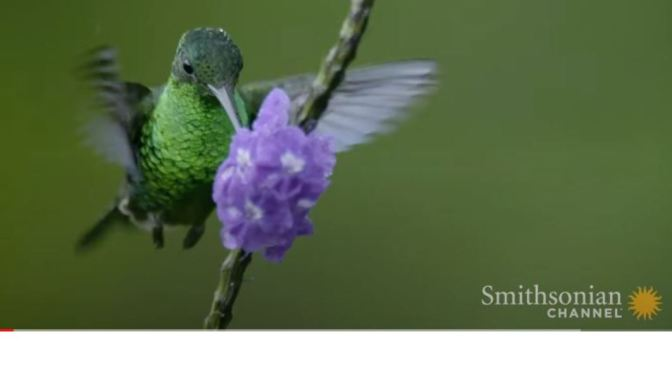"""Wildlife: """"Hummingbirds Don't Like Flying In Rainy Conditions"""" (Smithsonian)"""