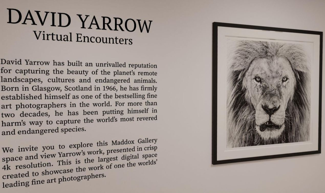 David Yarrow Virtual Encounters