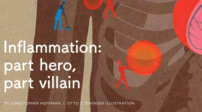 "Health: ""Inflammation – Part Hero, Part Villain"" (Yale Medicine Magazine)"