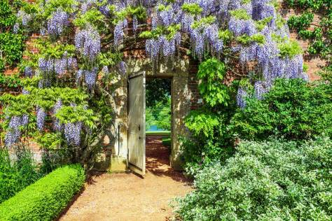 Wisteria Bodnantense framing the doorway out of the walled garden towards the lake - Bodwood House England - Tatler - June 10 2020