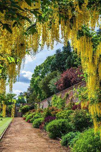 The Hot border designed by Rosie Abel Smith with a mixture of wonderful purples, oranges and reds seen through an arch of Laburnum Vossii - Bodwood House Private Walled Garden - Tatler - June 10 2020