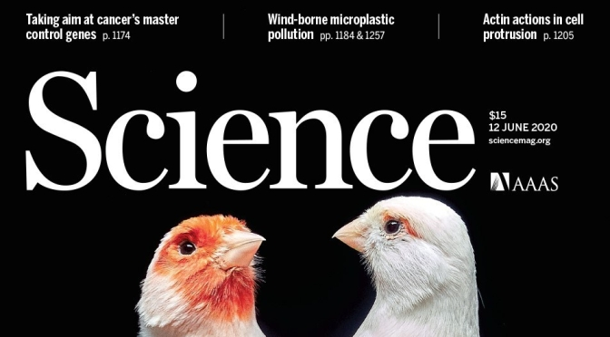 TOP JOURNALS: RESEARCH HIGHLIGHTS FROM SCIENCE MAGAZINE (JUNE 12, 2020)