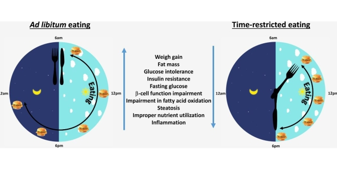 "Diet Studies: Benefits Of ""Time-Restricted Eating"" (TRE) Improve With Greater Time Restriction"