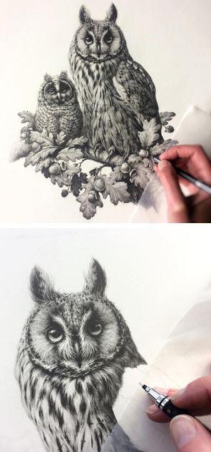 Vanessa Foley - Bird Artist