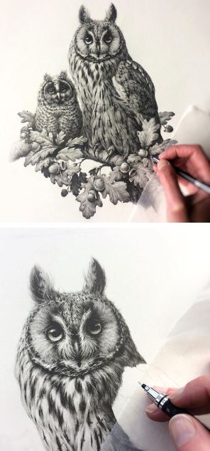 Vanessa Foley - Bird Artist