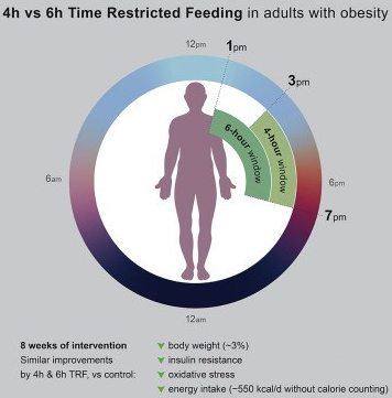 4- And 6-Hour Time Restricted Eating TRE Diets