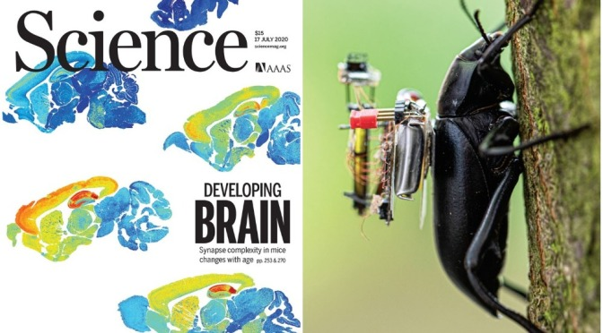 TOP JOURNALS: RESEARCH HIGHLIGHTS FROM SCIENCE MAGAZINE (JULY 17, 2020)