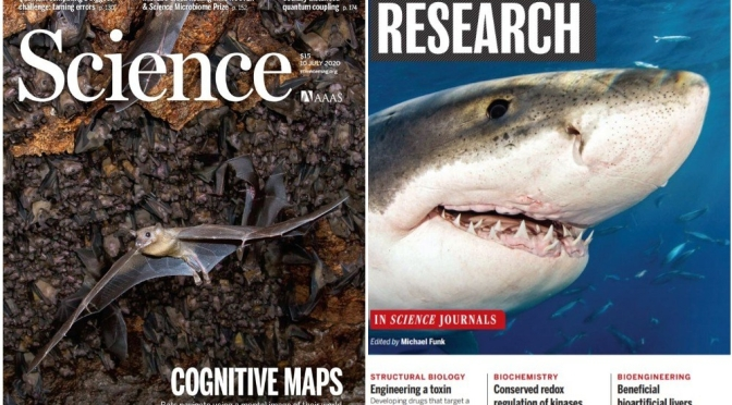 TOP JOURNALS: RESEARCH HIGHLIGHTS FROM SCIENCE MAGAZINE (JULY 10, 2020)