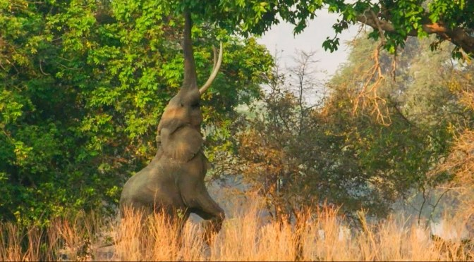 "Travel & Wildlife Videos: ""The Plains Of Zimbabwe"""