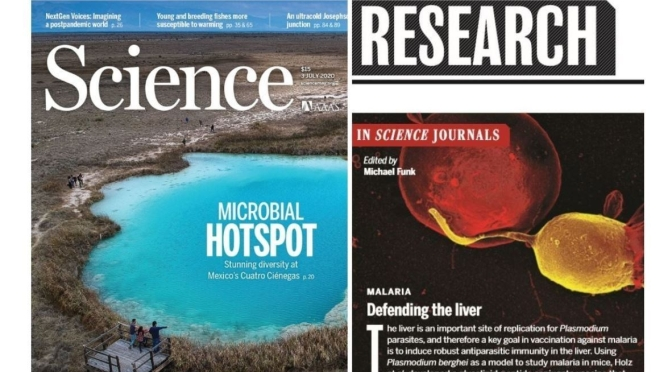TOP JOURNALS: RESEARCH HIGHLIGHTS FROM SCIENCE MAGAZINE (July 3, 2020)