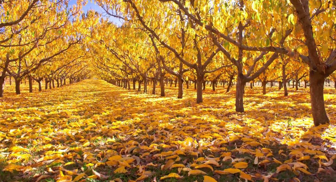 Seasons & Skyscapes - Central Otago - Timelapse Travel Video - Stephen Paitence - July 9 2020