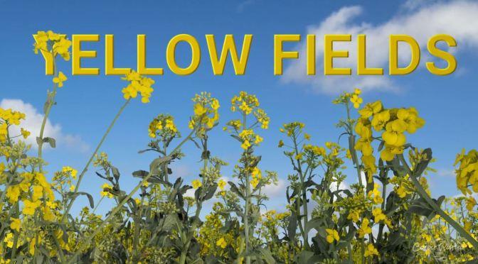 "Timelapse Travel Videos: Denmark's ""Yellow Fields"" By Casper Rolsted (2020)"