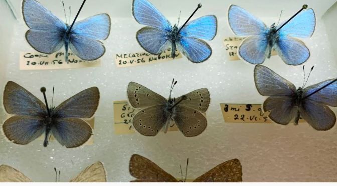 """Online Collection Video: Cornell To """"Digitize"""" 7 Million Insect Specimens"""