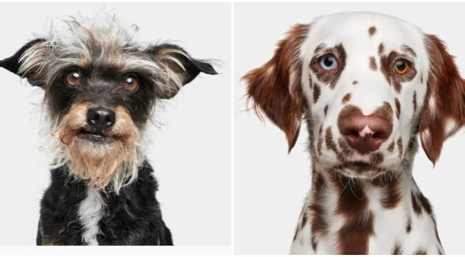 """Best New Pet Books: """"Good Dog – A Collection Of Portraits"""" (Rizzoli Video)"""