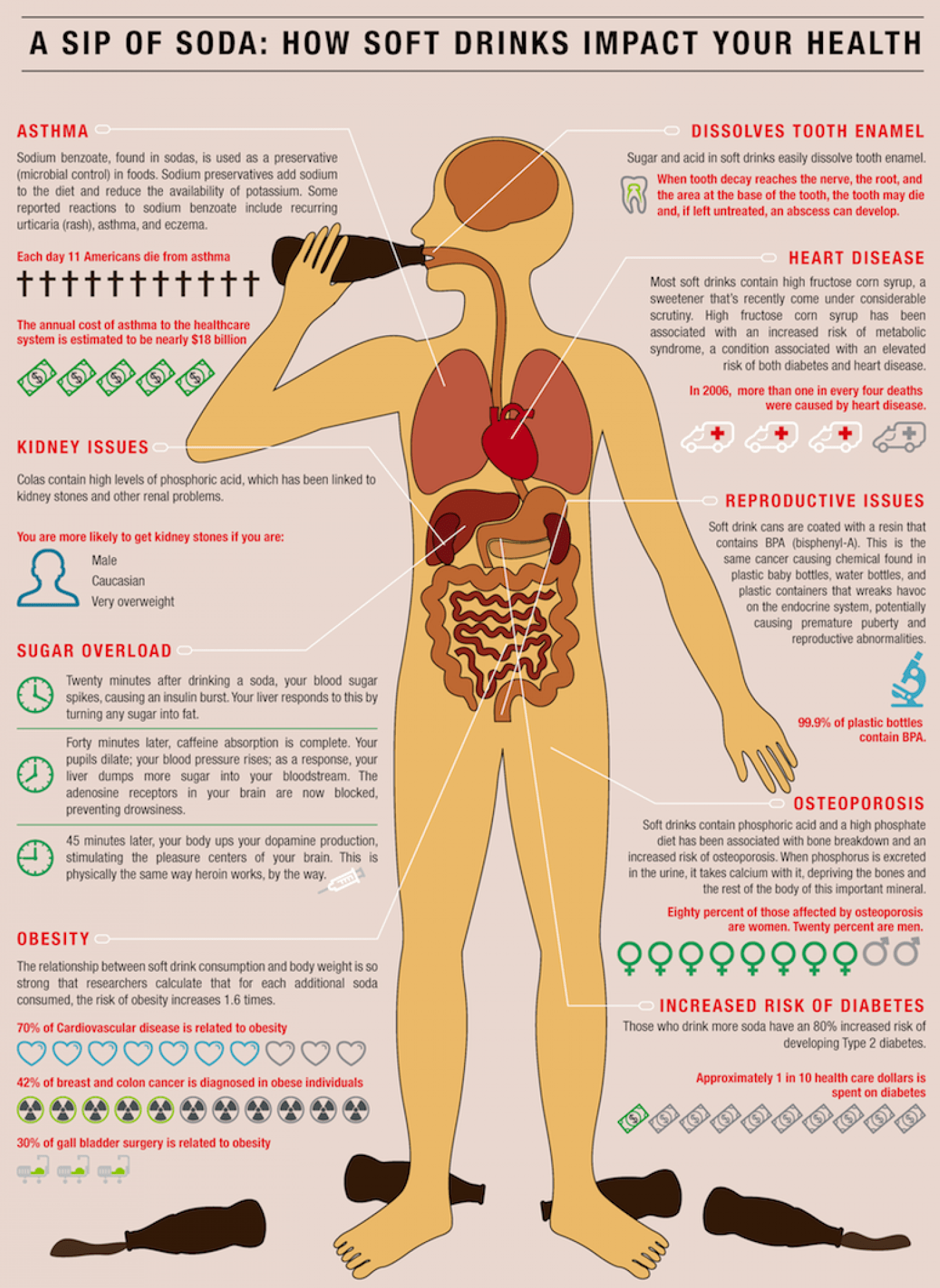How Soda Affects the Body - Infographic